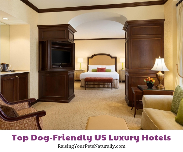 Pet friendly hotels in Delaware