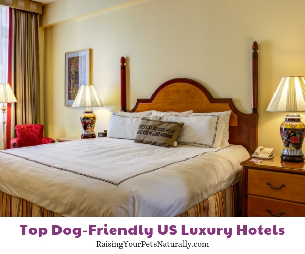 dog-friendly Rhode Island luxury hotels