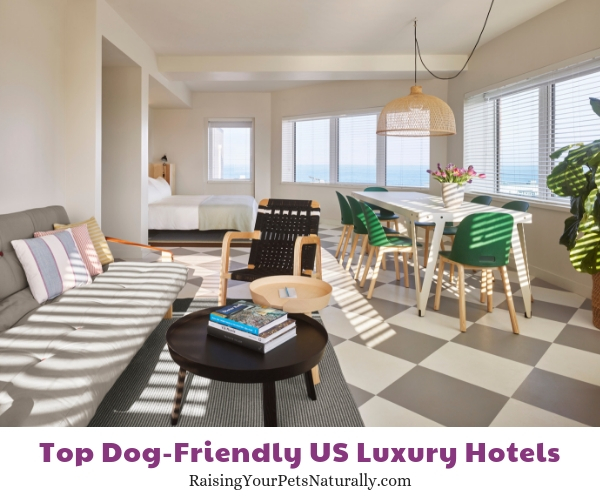 Dog friendly hotels in New Jersey