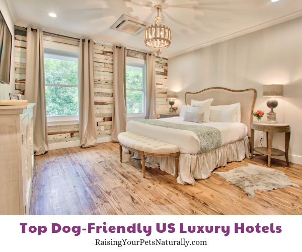 dog-friendly mississippi hotels