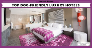 Best luxury hotels that allow dogs