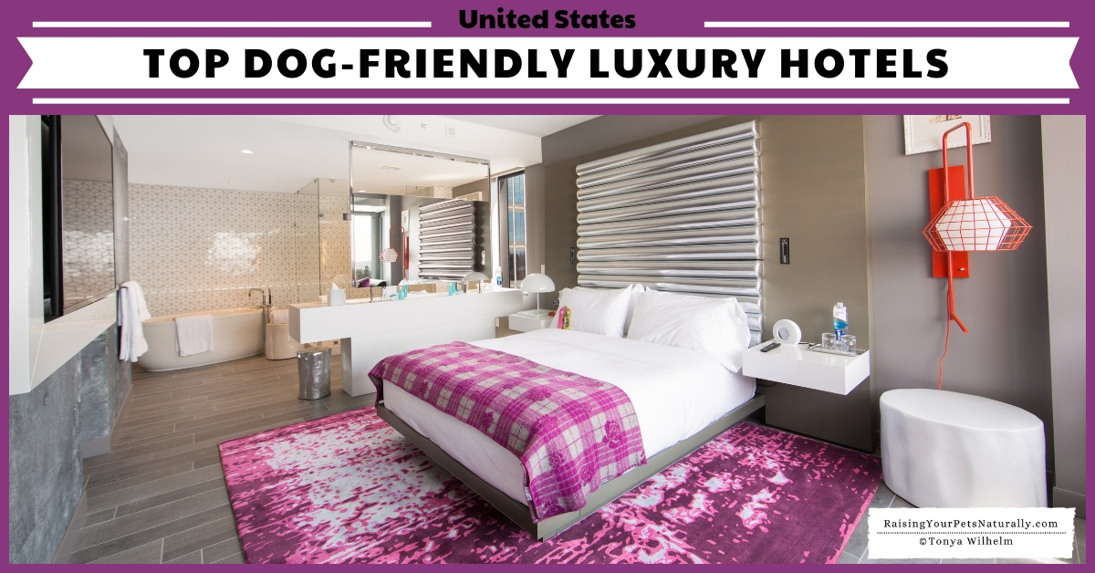 Top Dog-Friendly Luxury Hotels and Pet-Friendly 5 Star Boutique Hotels