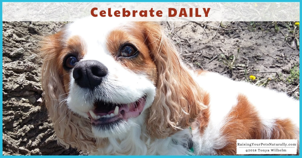 Happy 9th Birthday Dexter The Dog! Read my one wish to all of my pet-loving friends. #raisingyourpetsnaturally