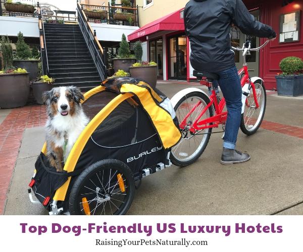 Dog-friendly hotels and resorts in Idaho