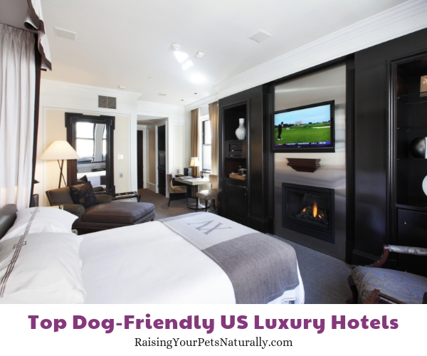 Pet-friendly luxury hotels in Massachusetts
