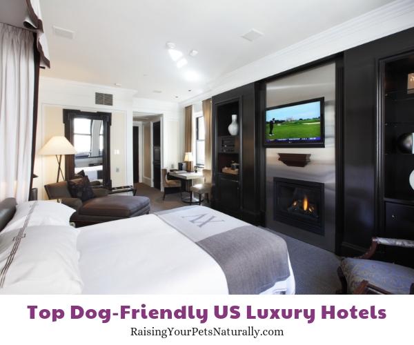Pet-friendly luxury hotels in Massachusetts