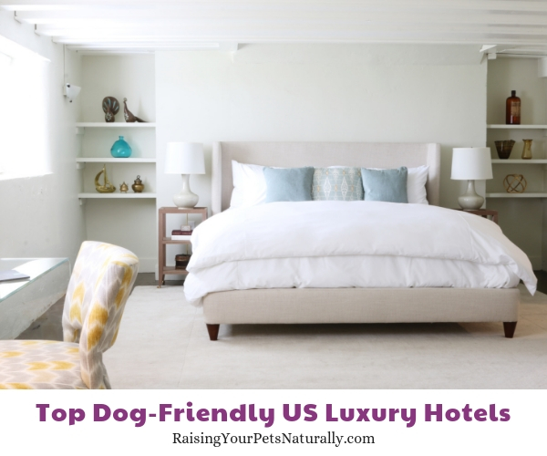 dog friendly accommodations Anchorage 1770