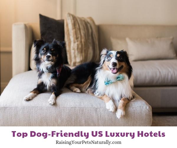 dog friendly accommodations Four Seasons Hotel Austin