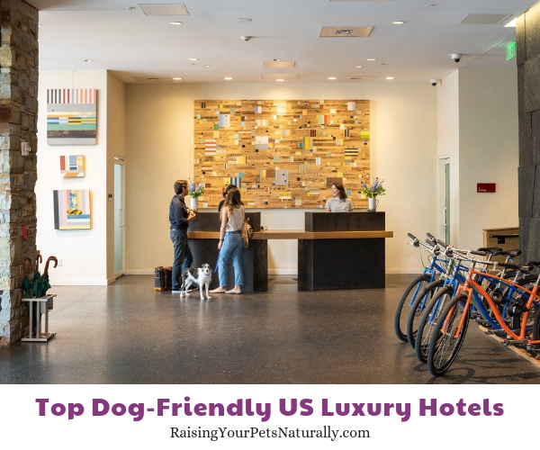 dog friendly resorts Hotel Vermont