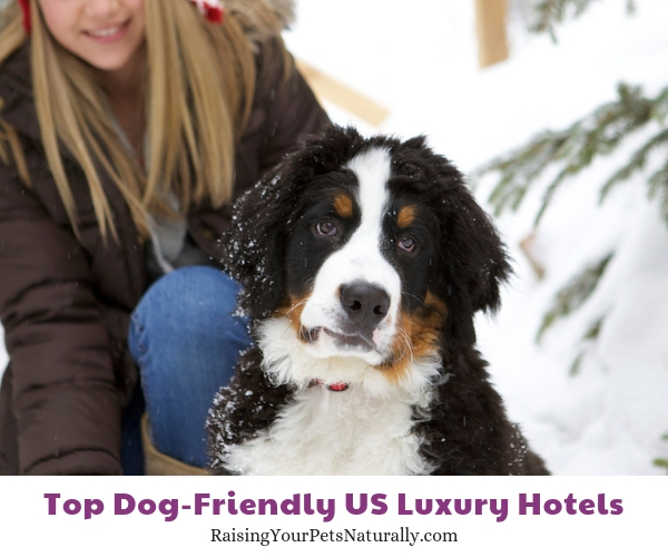 dog friendly resorts Montage Deer Valley