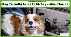 Dog-Friendly St. Augustine