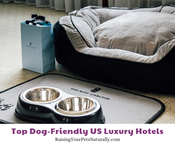Dog friendly Ritz hotel DC