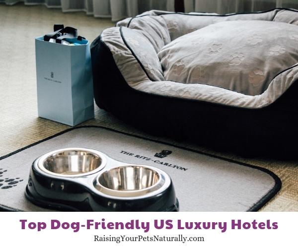 Dog friendly Ritz hotel DC