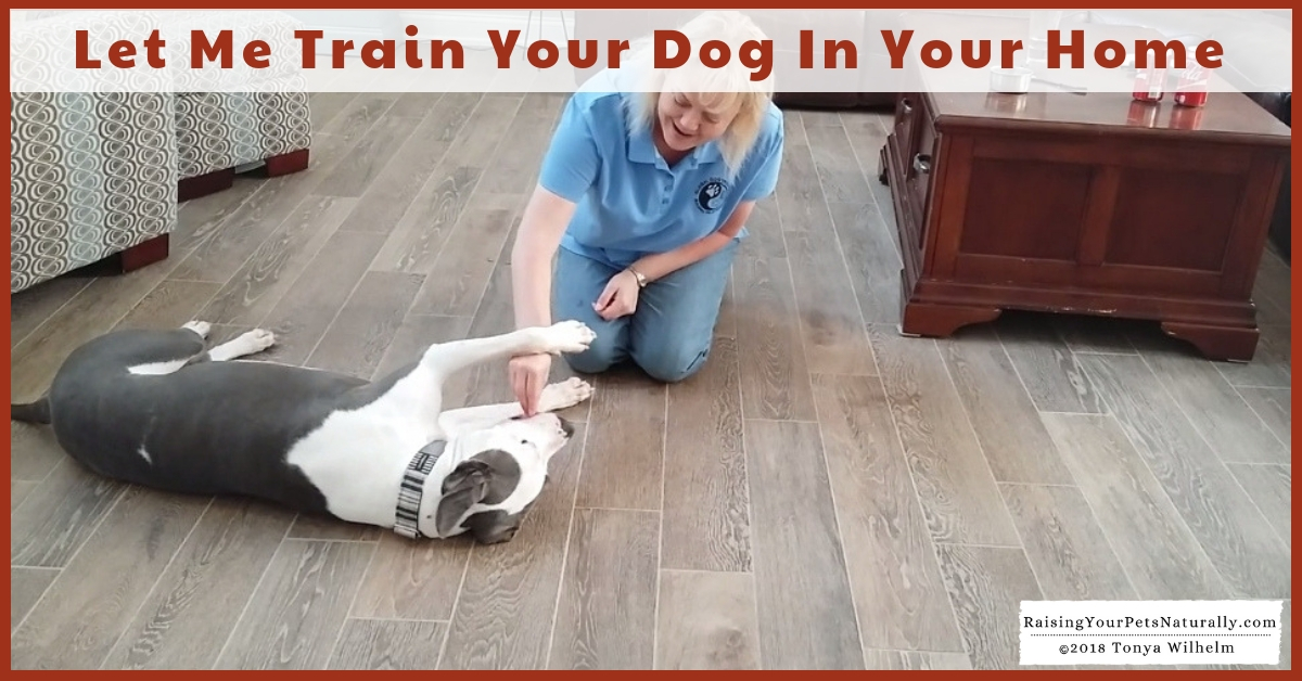Toledo Metro Private Dog Training and Trainers   Alternative to Toledo Board and Train and Drop-Off Dog Training. Positive and effective dog training in your home.