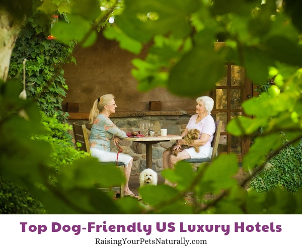 Pet-friendly hotels in Arizona.