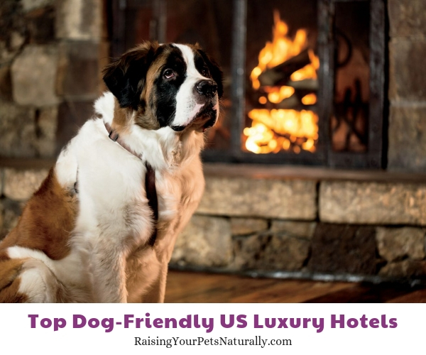 Dog-friendly California Hotels