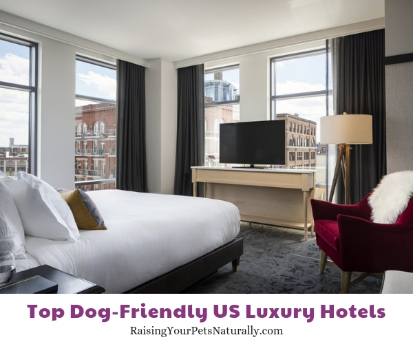 Dog friendly 5 star hotels in WI