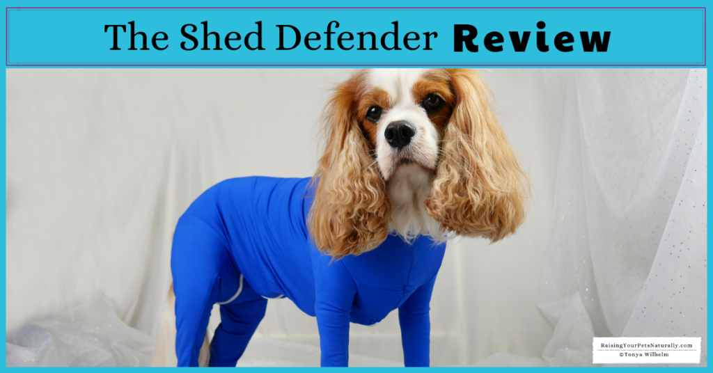 Shed Defender Onesie for Dogs Review. The Shed Defender had a lot of useful applications beyond containing a dog's shedding. #raisingyourpetsnaturally
