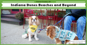 Dog-Friendly Indiana Dunes Beaches and Beyond | Traveling with Dogs in Indiana