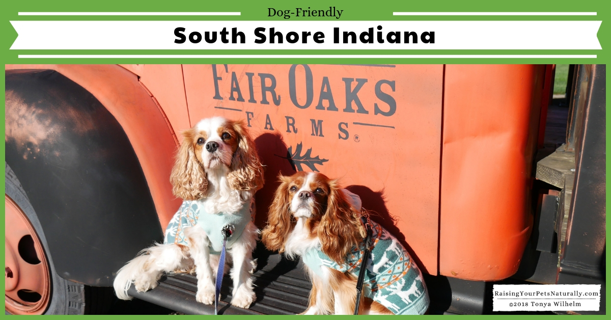 Dog-friendly Northern Indiana things to do along Lake Michigan. Dog-friendly South Shore things to see and do. #raisingyourpetsnaturally