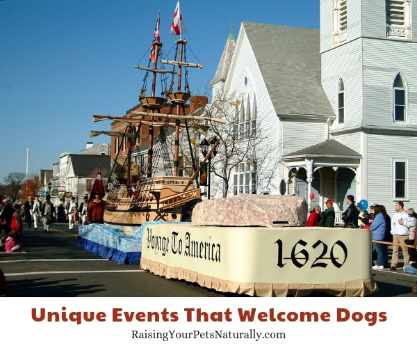 Thanksgiving the America's Hometown Thanksgiving Celebration, Plymouth, Massachusetts dog-friendly