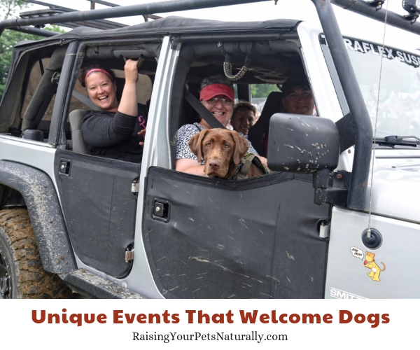 Jeep Festival allows leashed dogs