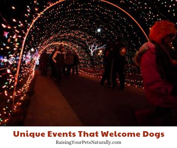 Events in Clarksville, TN that allow dogs