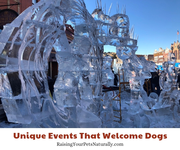Fun things to do in winter with a dog