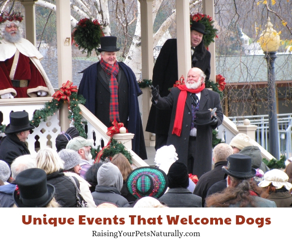 Best events to take a dog in the winter