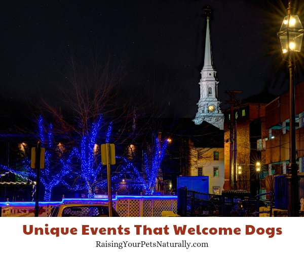 Pet friendly Portsmouth New Hampshire