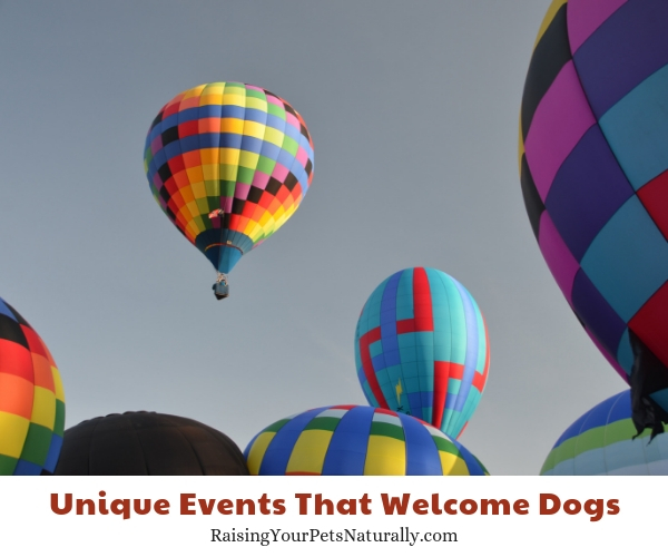 Dog-friendly attractions in Helen Georgia