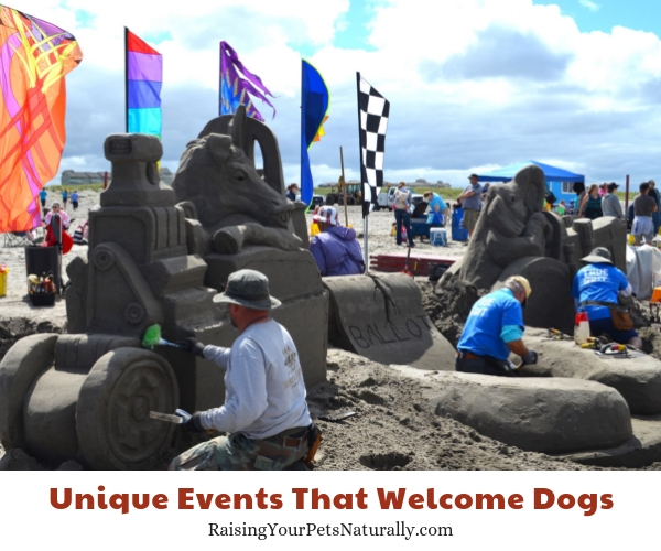 SandSations, Long Beach, Washington dogs allowed