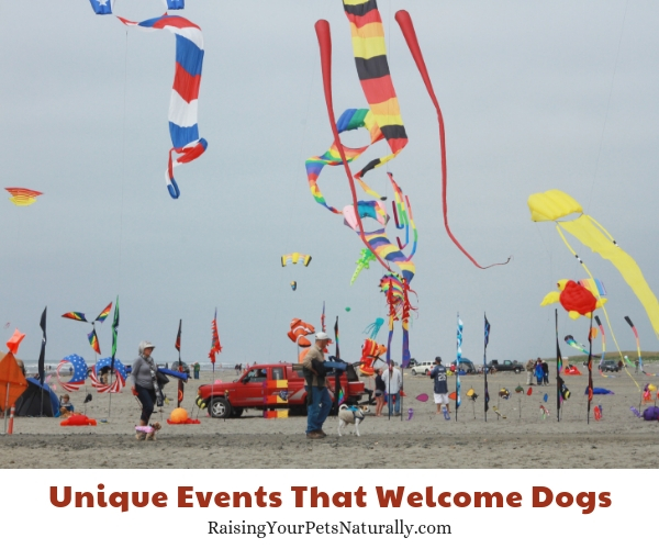 Dog-friendly events in Washington