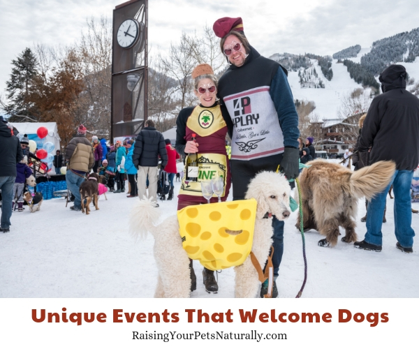 Wintersköl™, Aspen, Colorado- allows dogs
