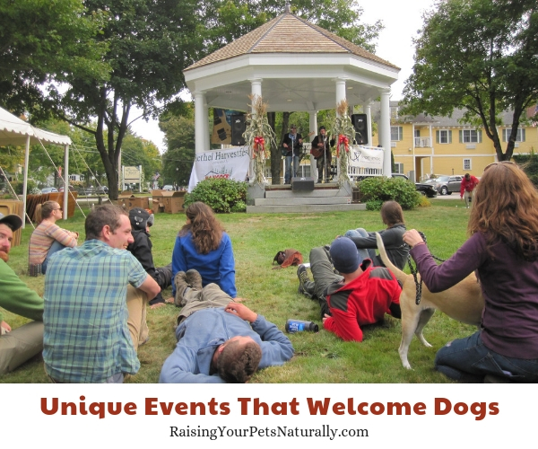 Attractions in Bethel Maine that allow dogs