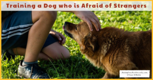 Training a Scared Dog | Dog with Anxiety Towards People and Strangers