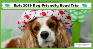Road Trip with a Dog | Dexter The Dog's Epic 2019 Dog-Friendly Road Trip