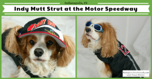 Pet-Friendly Indianapolis Road Trip to The Mutt Strut at the Indianapolis Motor Speedway