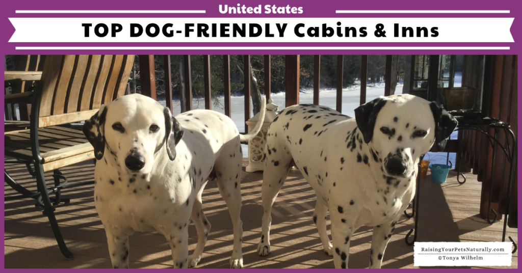 The Best Dog-Friendly Cottages, Lodges, Cabins, and B&B Resorts in the US. #raisingyourpetsnaturally