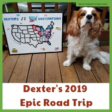 Dog-Friendly Road Trip Ideas