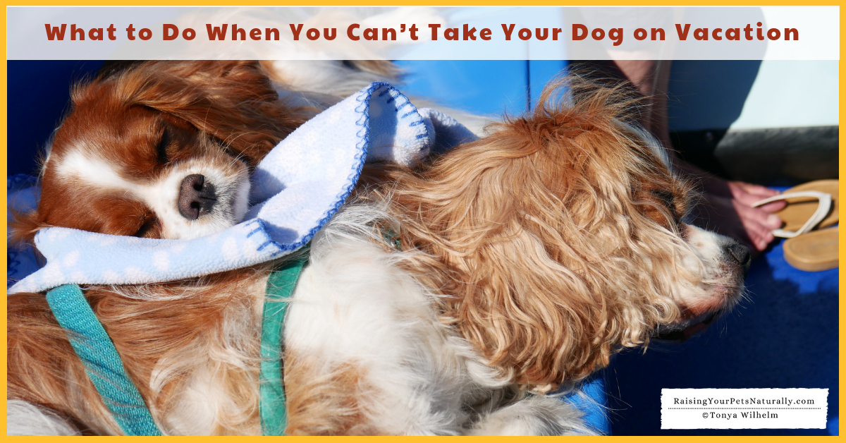 What to Do When You Can't Take Your Dog on Vacation. #raisingyourpetsnaturally