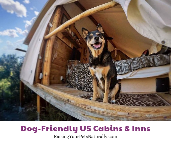 The Best Dog-Friendly Cottages, Lodges, Cabins, and B&B Resorts in