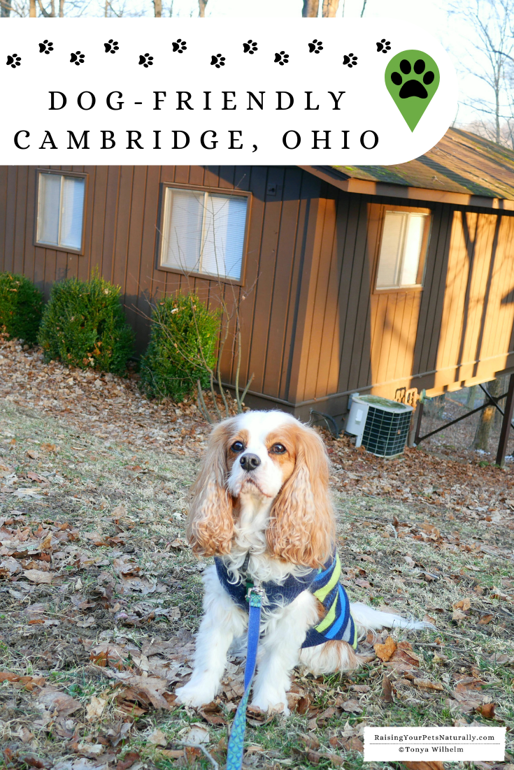 Dog-Friendly Vacations in the Midwest - Cambridge, Ohio. Dog-Friendly Restaurants and Landmarks. #raisingyourpetsnaturally #dogfriendlyvacations #dogfriendlyrestaurants #dogfriendly #petfriendly #roadtripwithdog #travelingwithdogs #dogfriendlycottages