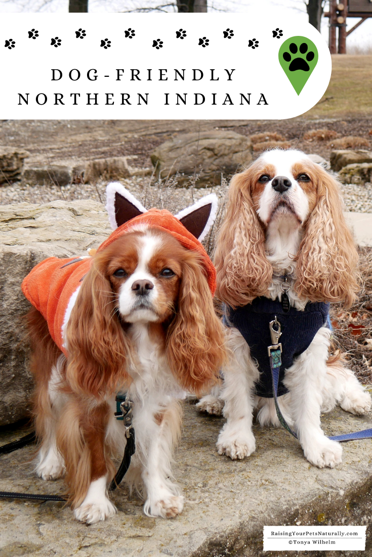 Dog-friendly Northern Indiana Road Trip. Don't miss our great dog-friendly travel guide to Northern Indiana. #RaisingYourPetsNaturally #DextersDestinations #dogfriendly #petfriendly #dogfriendlyindiana #petfriendlyindiana