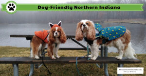 Dog-Friendly Northern Indiana | Weekend Road Trip with Dogs