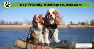 Dog-Friendly Wilmington, Delaware Road Trip | Pet-Friendly Wilmington, Delaware Travel Guide