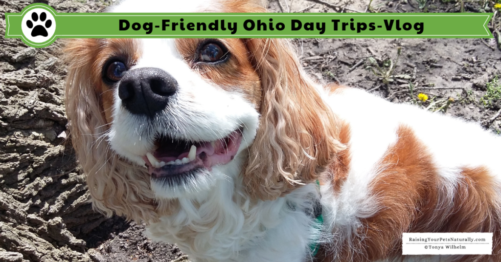 Dexter has been enjoying his dog road trips. This month, we stayed close to home and explored our own state, Ohio. We had a great time being local tourists