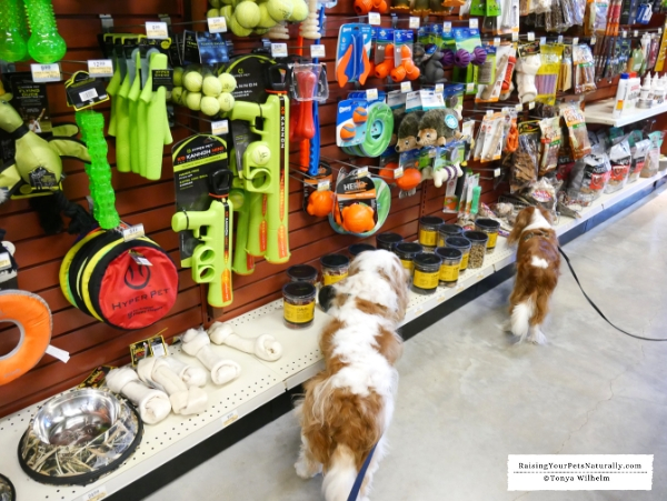 Dog-friendly stores near me