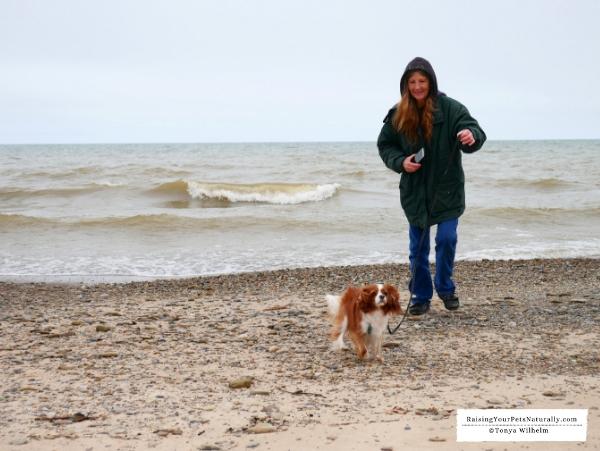 Best dog-friendly beaches