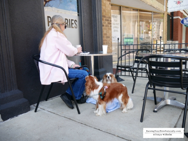 Coffee shops that are dog friendly